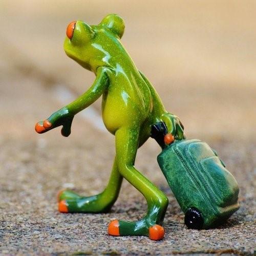 Вопросы по сказке Лягушка-путешественница - пройти тест онлайн ...